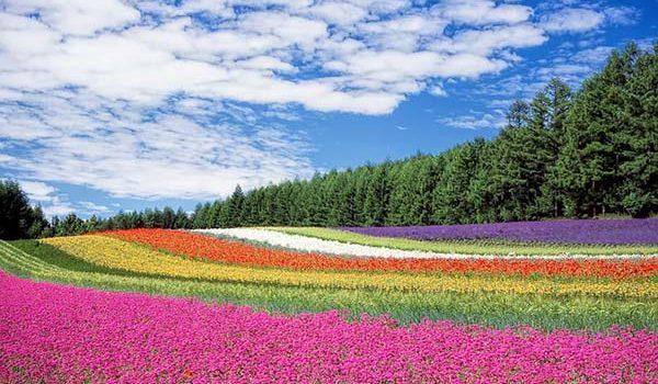 Своеобразные острова Японии и их особенности