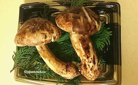 Японское дорогое лакомство — грибы мацутакэ
