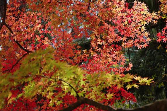 autumn-533484_640