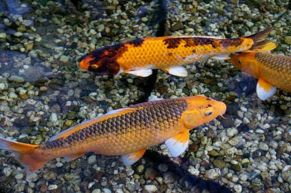 fish-850975_640-kopiya