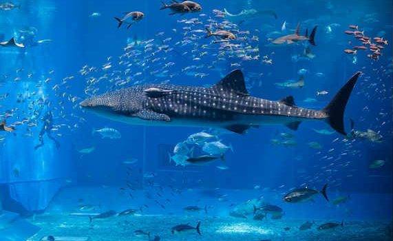 Чудесный японский океанариум!