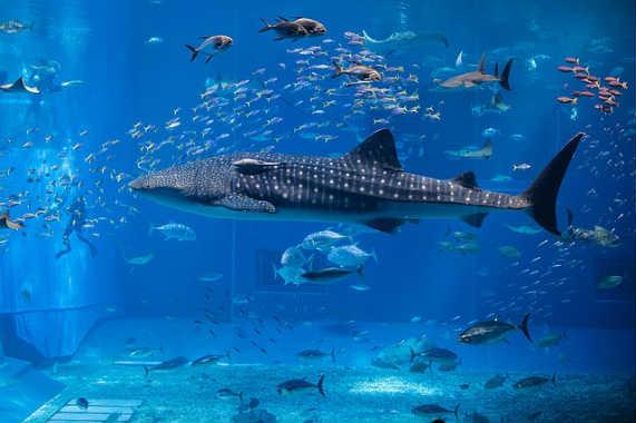 whale-1417883_640