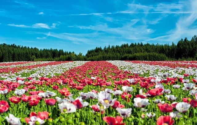 Уникальные цветочные поля и лавандовое мороженное о.Хоккайдо!