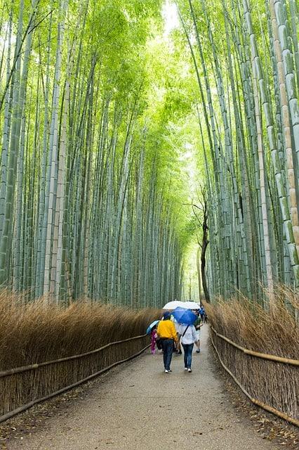 Знаменитая Бамбуковая роща в Киото