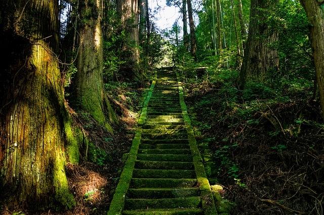 Когда лучше ехать в Японию весной или осенью? Что следует знать об отдыхе в каждый сезон.
