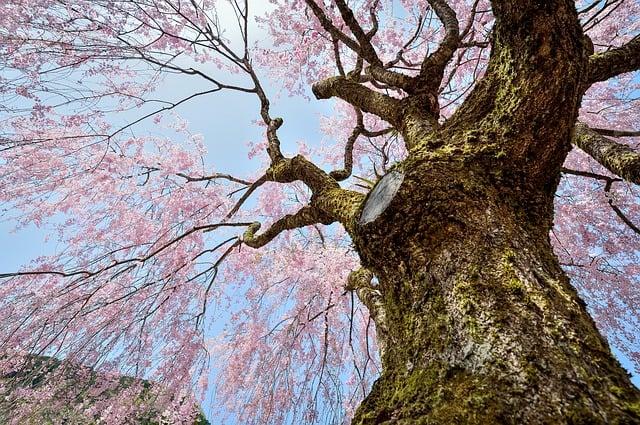 Сюнбун-но-хи: традиционный японский праздник – день когда духи становятся осязаемыми