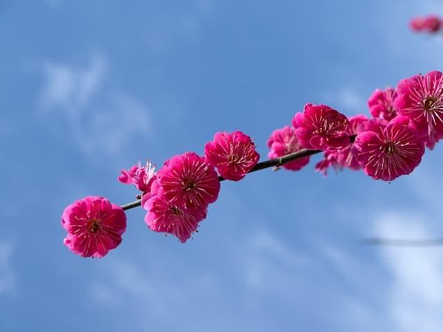 Изменится летоисчисление в Японии, 1 мая - начало новой Эры.